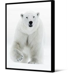 Toile encadré Ours blanc, collection My gallery, Pôdevache