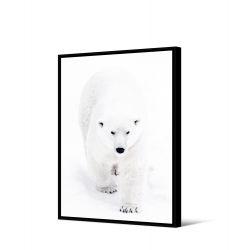 Toile encadré Ours blanc qui marche 65 x 92,5 cm, collection My gallery, Pôdevache
