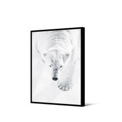Toile encadré Ours blanc qui marche 50 x 70 cm, collection My gallery, Pôdevache