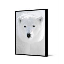 Toile encadré Ours blanc portrait 65 x 92,5 cm, collection My gallery, Pôdevache